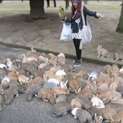 Кога зајците би владееле со светот...