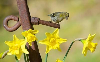 Пролет во Велика Британија