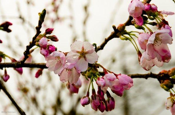 Спакувај ми пролет