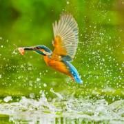 Прекрасни живописни фотографии со птици