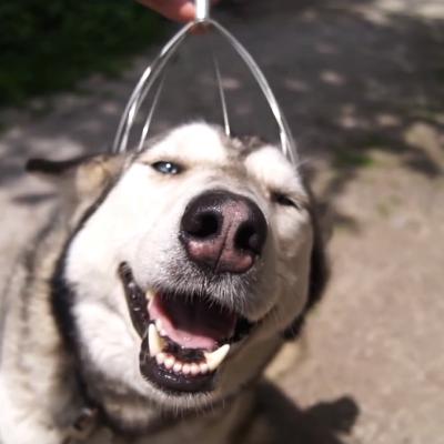 Куче за прв пат искусува масажа на главата