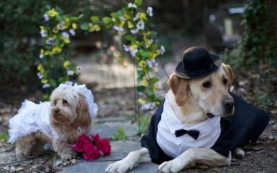 Овие две кучиња сигурно имаат поубав свадбен албум од вашиот