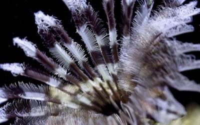 Досега невидената убавина на бавниот морски живот
