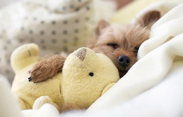 Слатки кутриња спијат во прегратките на своите плишани играчки