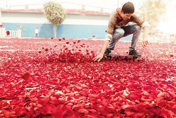 Коста Рика покриена со милиони цветни ливчиња