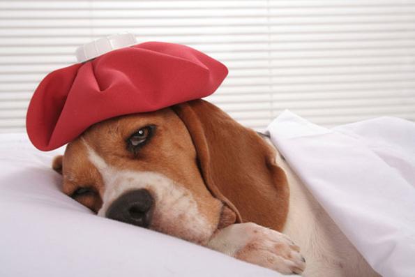 6 знаци дека вашето куче чувствува некаков вид на болка