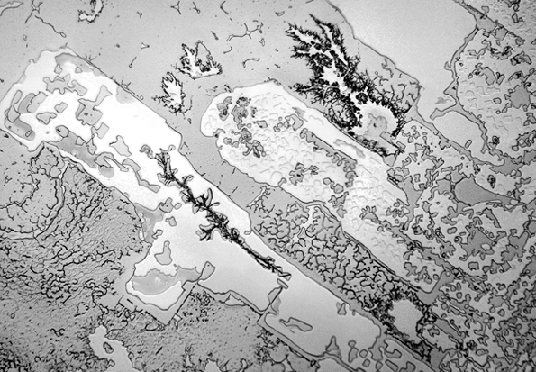 Погледнати под микроскоп, различни видови на солзи имаат различна структура