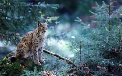 Фотографии кои ја покажуваат магичната страна на шумите во Баварија