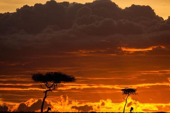 Неверојатни фотографии од Масаи Мара, Кенија за време на изгрејсонце и зајдисонце