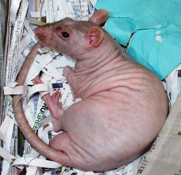 Дали би ги препознале овие животни без нивните крзна?