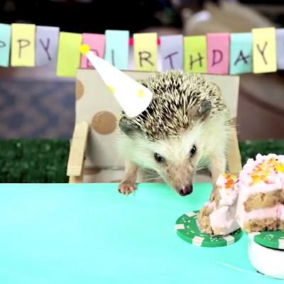 Малата роденденска забава на малото еже