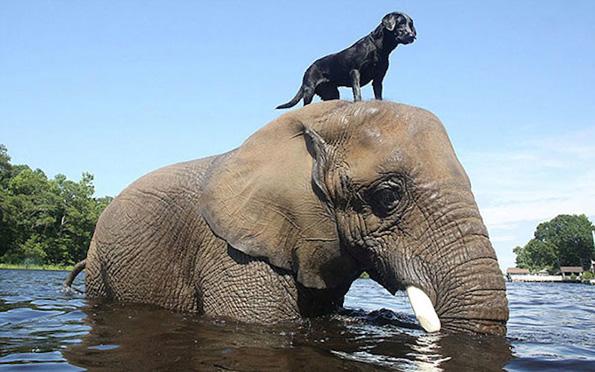 Необични пријателства помеѓу животните кои ќе ви го стопат срцето