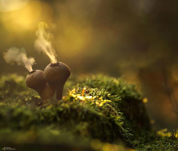 Мистичниот свет на печурките
