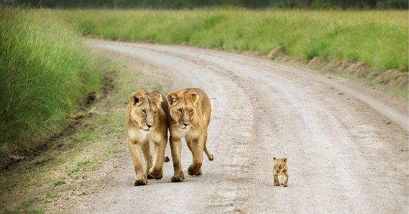 Семејни портрети од животинското царство