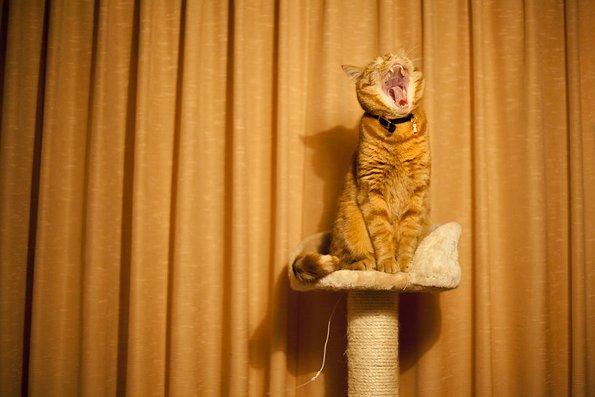 Запознајте го Лучи, страшниот мачор кој се проѕева и сака да прогонува
