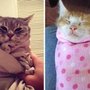 Есенско расположение: слатки миленици завиткани во ќебенца