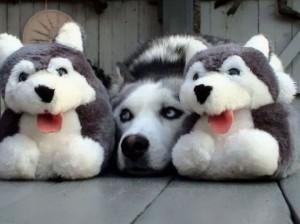 Домашни миленици кои се генијалци за камуфлажа