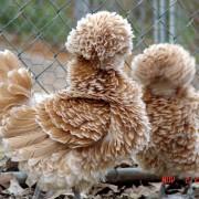 Животни со прекрасни и величествени крзна