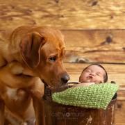 Неодоливи фотографии од големи кучиња кои се грижат за малечки деца