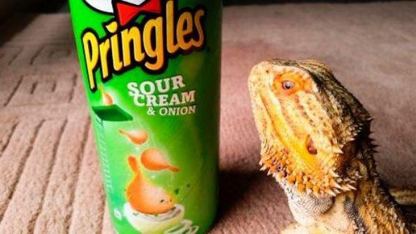 Авантурите на рептилчето Прингл
