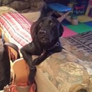 12 миленици кои не знаеле дека нивните стопани ќе се вратат дома порано