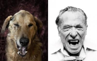 Овие кучиња неверојатно многу потсетуваат на познати поети и писатели