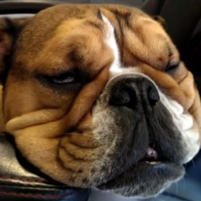 Признајте дека и вие спиете вака за празниците!