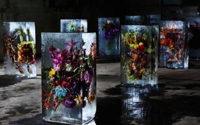 Прекрасни букети од цвеќиња замрзнати во коцки мраз
