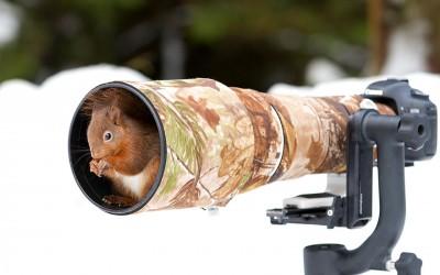 Животни кои се чувствуваат пријатно покрај фотоапарати