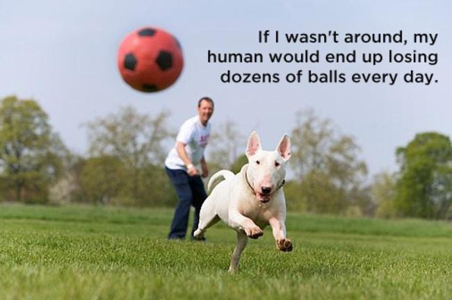 Кучешки мисли кои ќе ви покажат со какви дилеми се соочуваат вашите миленичиња