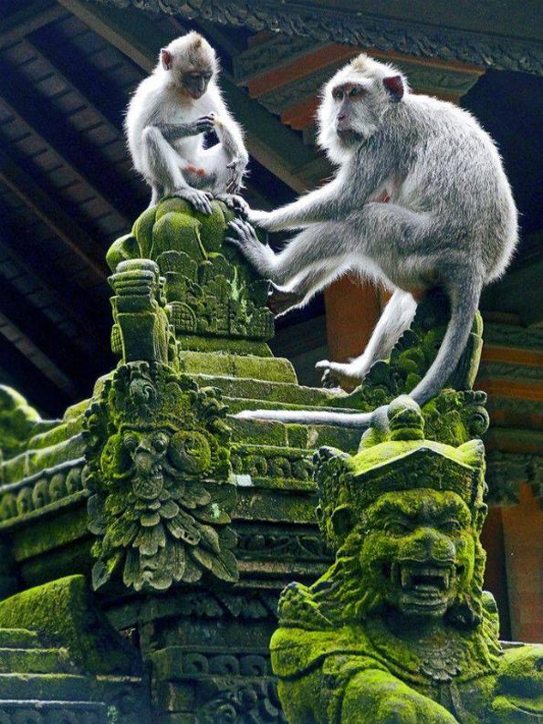 8-Odmor-od-sonishtata-Bali-kafepauza.mk