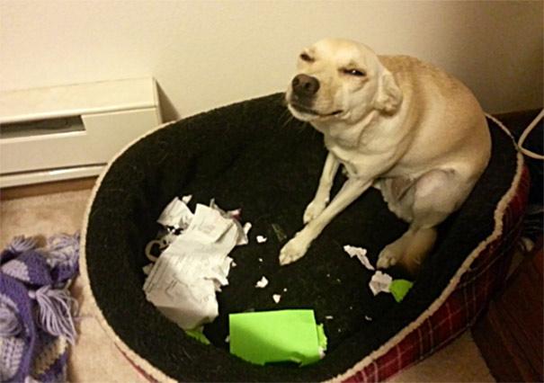 И кучињата понекогаш знаат да бидат безобразни