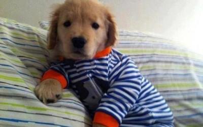 Неодоливи кучиња во пижами
