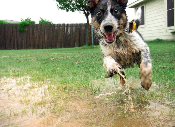 (1) 15 нешта кои секој човек може да ги научи од кучињата