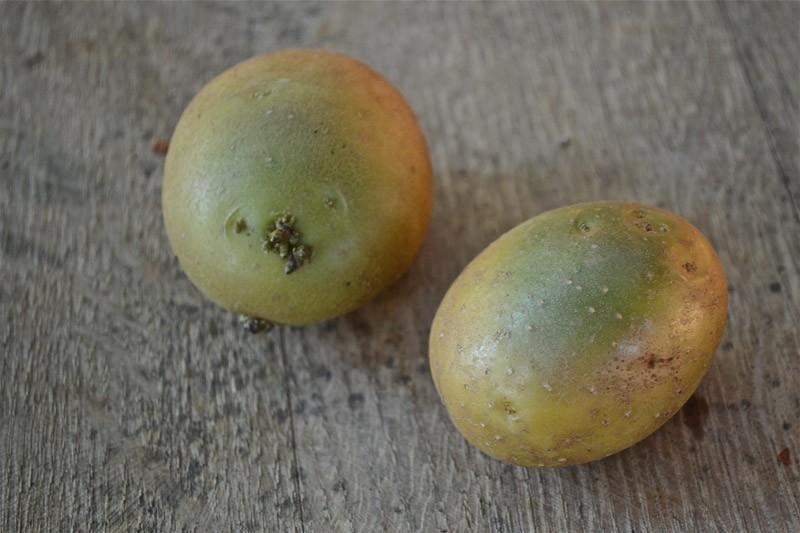 Зошто е опасен позеленетиот дел од компирот?