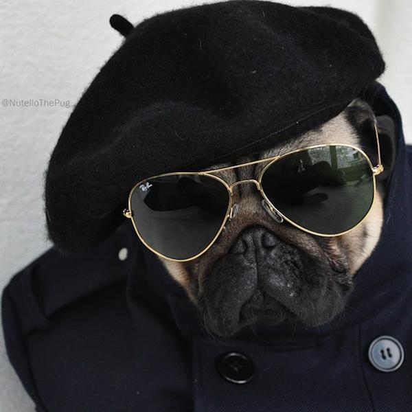 (1) Најмодерното куче во светот поставува нови модни стандарди