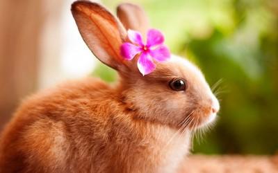 Овие фотографии ни покажуваат дека и зајчињата се талентирани модели