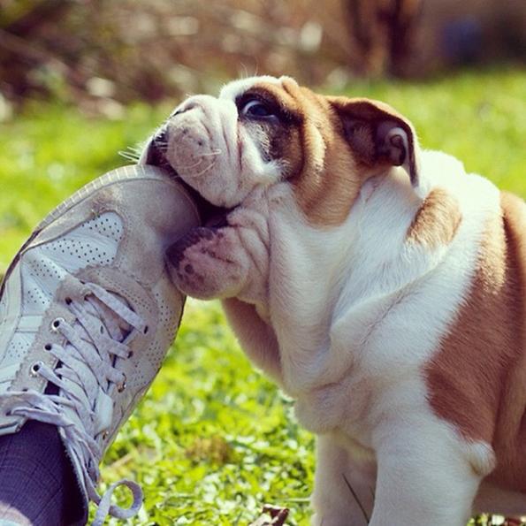 (10) 15 нешта кои секој човек може да ги научи од кучињата
