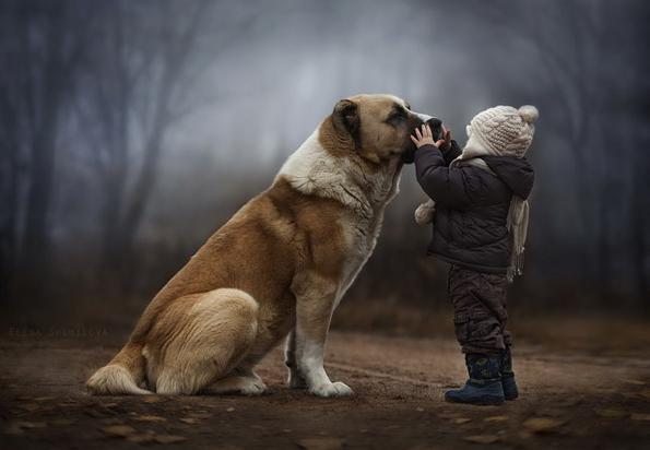 (11) 15 нешта кои секој човек може да ги научи од кучињатаfepauza.mk