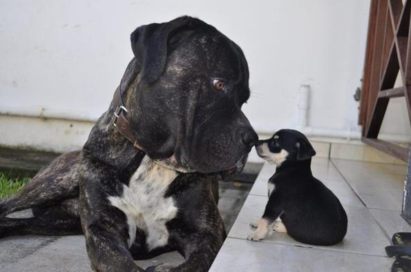 (13) 15 нешта кои секој човек може да ги научи од кучињата