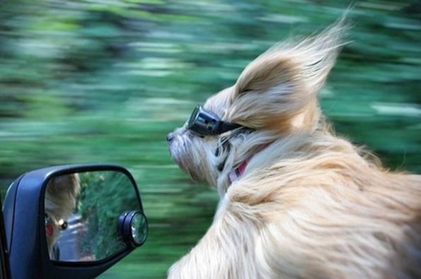 (14) 15 нешта кои секој човек може да ги научи од кучињата