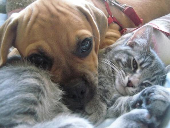 (6) 15 нешта кои секој човек може да ги научи од кучињата