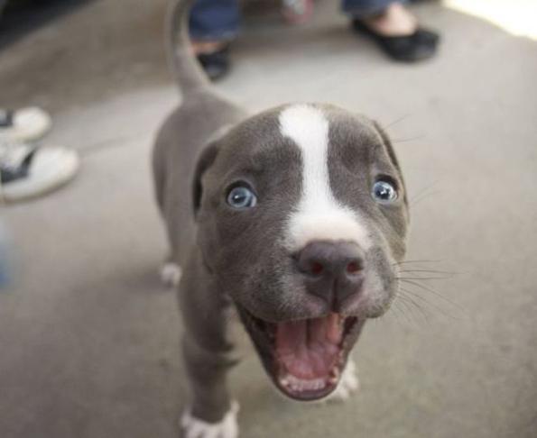 (7) 15 нешта кои секој човек може да ги научи од кучињата