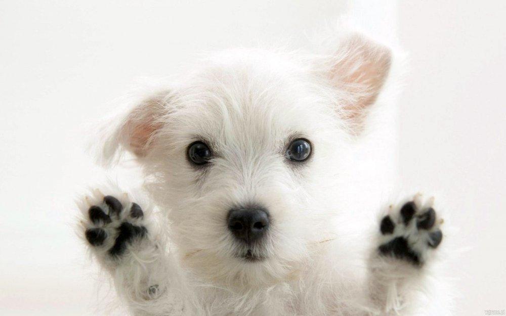 Кучињата можат да препознаат лажговци на кои потоа не им веруваат