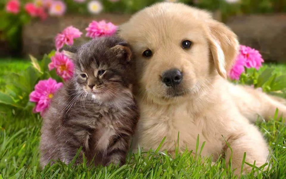 Опасности кои им се закануваат на домашните миленици во вашиот дом