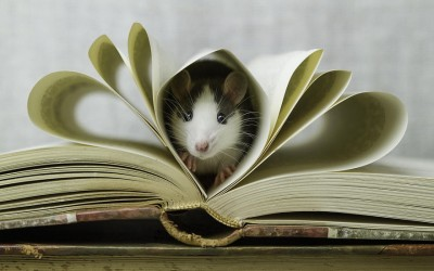 Не ги сакате глувците? А тие можат да бидат толку слатки…