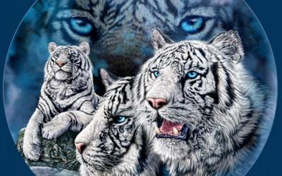 Оптичка илузија: Колку тигри можете да пронајдете на сликата?