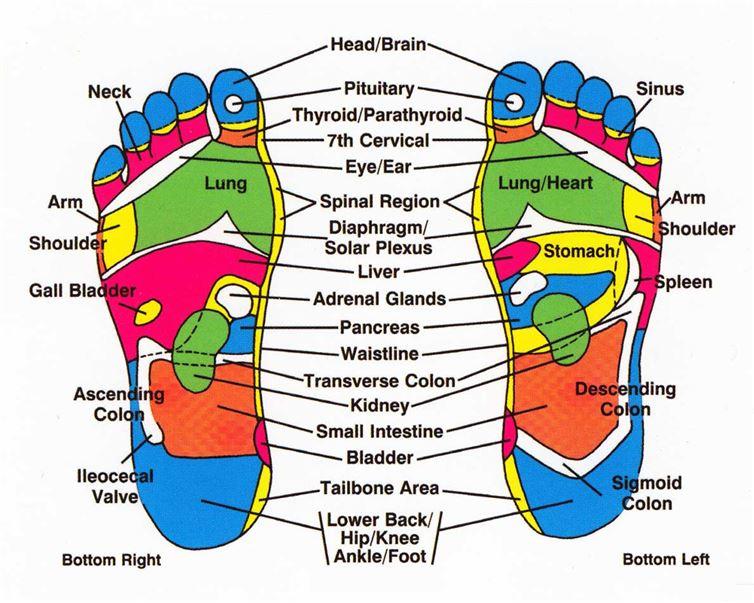 (2) Зошто треба да ставате кромид во вашите чорапи пред да си легнете да спиете?