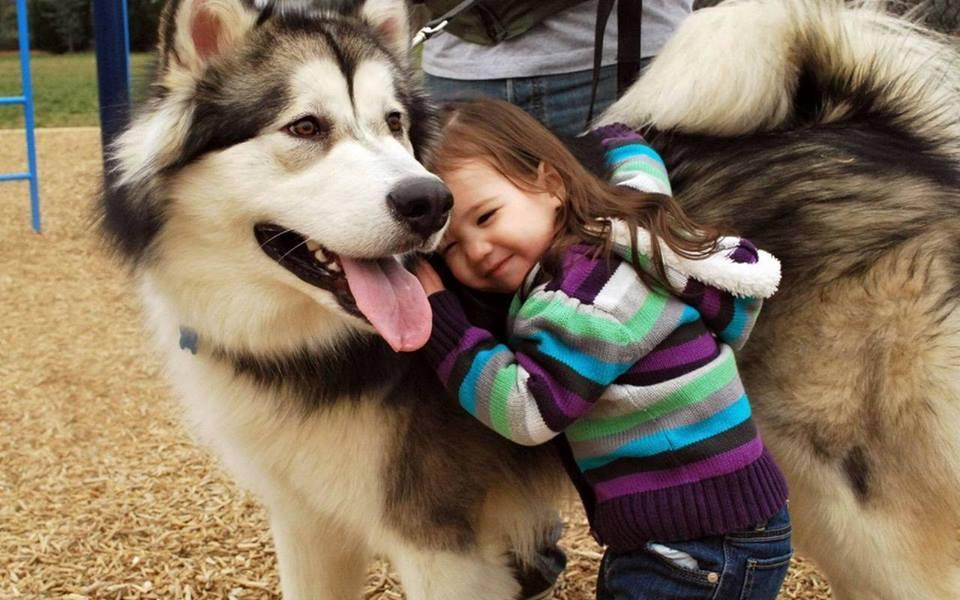 15 нешта кои ќе ги разберат само оние луѓе кои чуваат големо куче