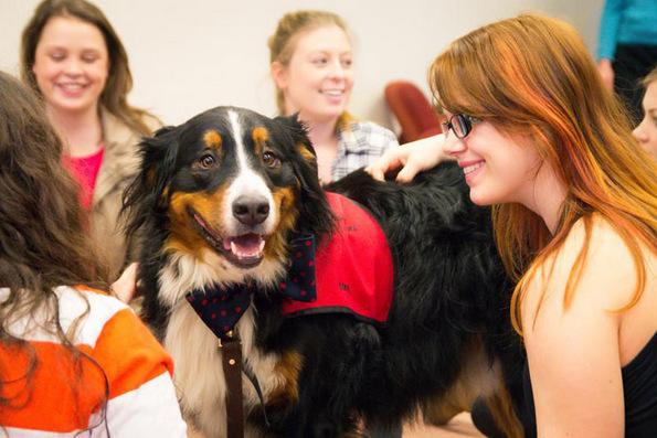 (3) Универзитет создал просторија со кутриња која им помага на студентите да се опуштат